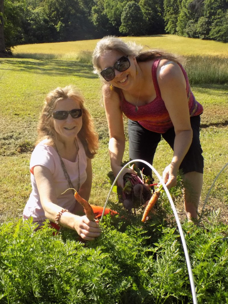 Marianne Huff, left, and Deb Burger gather fresh beets.