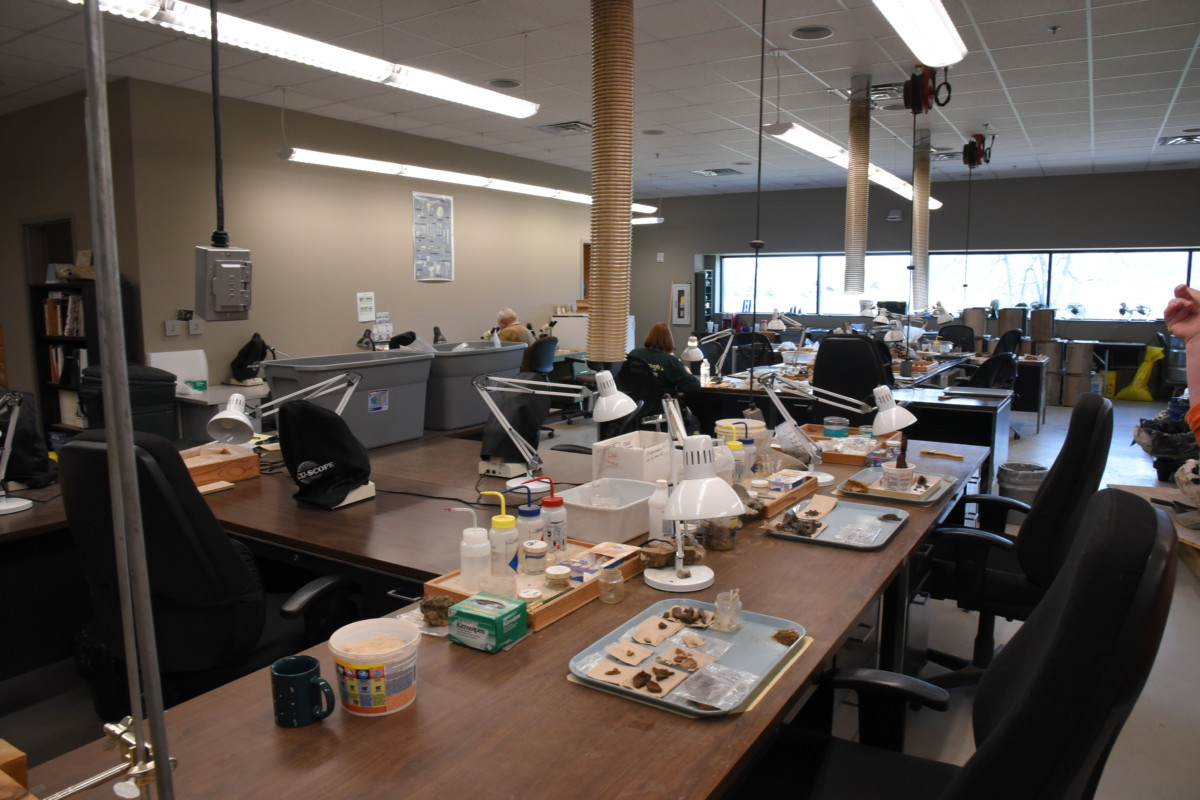 Before the fossils are on display, they are studied, cleaned, and assembled in the lab at the site.